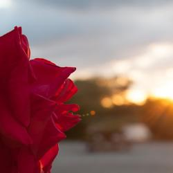 Etre vivante c'est aimer les couchers de soleil autant que le levé du jour...